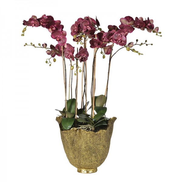 Damson Orchid Phalaenopsis Large Plants In Antiqued Gold Dec