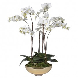 White Orchid Pretty Phalaenopsis Plants In Shallow Gold Glas